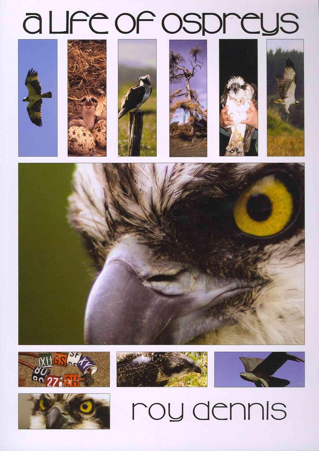 A Life of Ospreys By Dennis, Roy